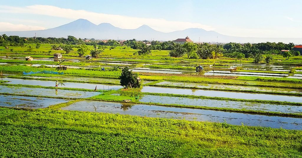 Rice fields and mountain views in Bali