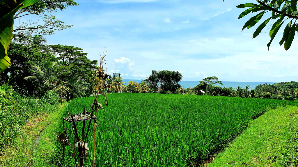 A vast green hill overlooks the water in Bali.